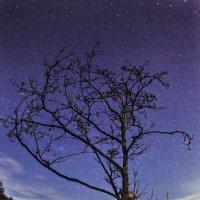 Ночное дерево :: Вячеслав Ложкин