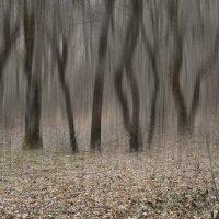 Заколдованный лес... :: владимир