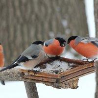 В птичьем кафе :: Ната Волга