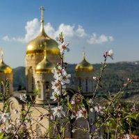 Весна на Святой Земле. :: Андрей Самсонов