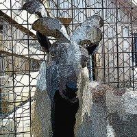 винторогий козел :: Юлия Денискина