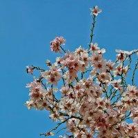 Весна! Навруз! :: Светлана