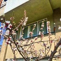 весна в Белграде.2 :: Алексей Цветков