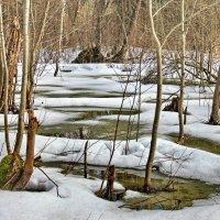 В лесу. :: Виталий Бененко