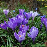Это просто весна...... :: Galina Dzubina