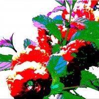 Цветы из сказки... :: Тамара (st.tamara)