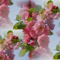 Фантазии весны... :: Тамара (st.tamara)