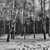 Зима в Кузьминках :: Владимир Брагилевский