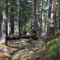 Весна в лесу. :: Наталья