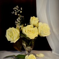 Розы :: Клара