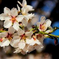 Крымская весна :: Ula57 Семёнова