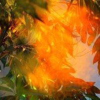 Заблудились в листве: свет закатный с пыльцою дождя вперемешку :: Татьяна Кадочникова