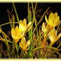 И родная мать-природа принесли весны звоночек..... :: Tatiana Markova