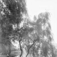 Городские пруды :: Роман Голак