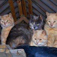 Мартовские коты. :: владимир