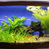Мой аквариум :: Дмитрий Лебедихин