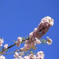 Весна пришла-16. :: Руслан Грицунь