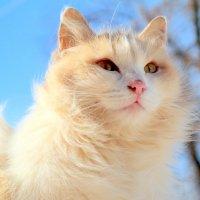 О мартовских кошках.. :: Андрей Заломленков