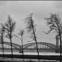 Ветер с залива :: galina bronnikova