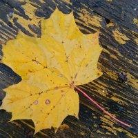 Осень :: Serega Serega