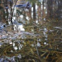 Листья в воде :: Вера Аксёнова