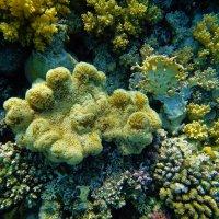 Островок мягкого коралла... :: Sergey Gordoff