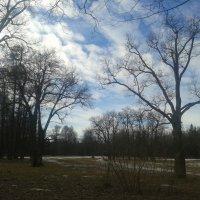 Весна в парке :: Сапсан