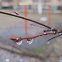 После дождя в середине марта :: Елена Семигина