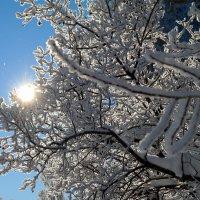 Узоры снежные.. :: Андрей Заломленков