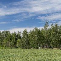 Хорошо летом на природе :: Игорь Сикорский