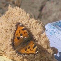 Весна: чья-то душа превратилась в бабочку... :: Алекс Аро Аро