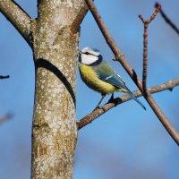 поцелуй весны :: linnud