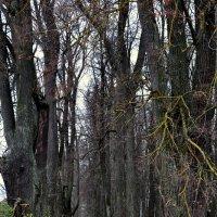 Старый парк :: Kaisa Mironova
