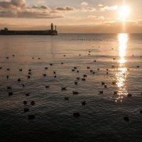 Один из чудесных Крымских рассветов :: Виталий Репкин