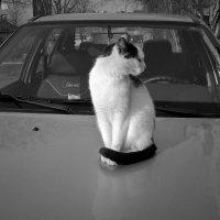 Не фотографируйте меня,я стесняюсь... :: Сергей Форос