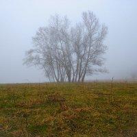 Туманное утро :: Бронислав Богачевский
