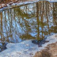 Отражение весны :: Юрий Стародубцев