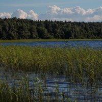 Озеро Копанское (Ленинградская область) :: Любовь Анищенко