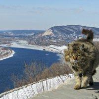 Волга :: наталия