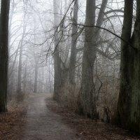В туманном парке.... :: Юрий Цыплятников