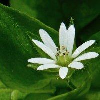 24 марта - Первый цветочеК .....!!! :: Серёжа Стрельников