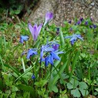 Нежная весна... :: Galina Dzubina