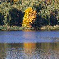 На озере :: Сергей Данилов