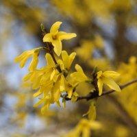 Весна пришла-27. :: Руслан Грицунь