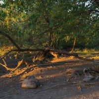 Жизнь деревьев :: catonbox