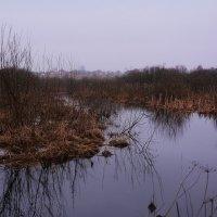 Люди на болоте. :: Paparazzi