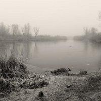 Утренний туман :: Роман Савоцкий