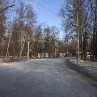 Сокольники :: Валерий Самородов