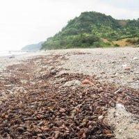 Выброс колорадского жука в Балтийском море :: Марина