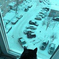 а из нашего окна... :: александр дмитриев